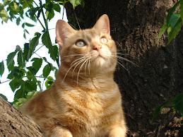 Mi gato Mateo