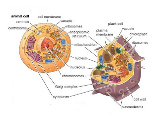 Biology cells the ultrastructure of plant cells the ultrastructure of plant cells ccuart Images