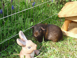 Welcome from Bramble and Mr. Rabbit!