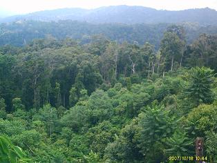 Hutan+sabana