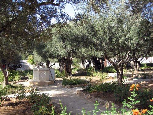 Margy 39 S Musings Garden Of Gethsemane