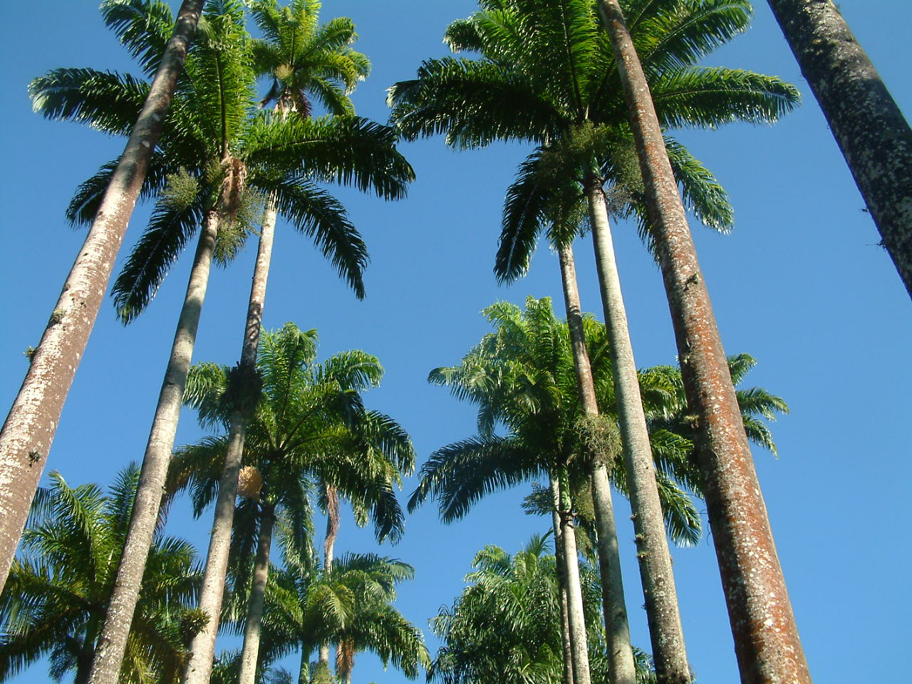 jardim plantas nativas:Jardim Botânico do Rio lança a Lista de Espécies da Flora do Brasil