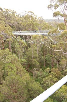 Treetop Walk Valley of the Giants
