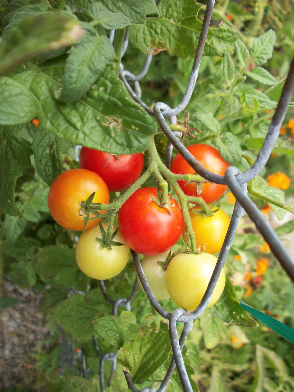 Image Result For How To Start A Fruit Garden