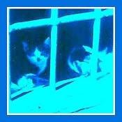 Gatos abandonados - 1996 *