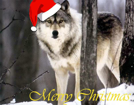 a wolf merry  christmas