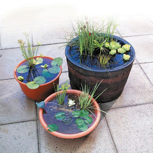Best of touscela container water gardening - Small water gardens in containers ...