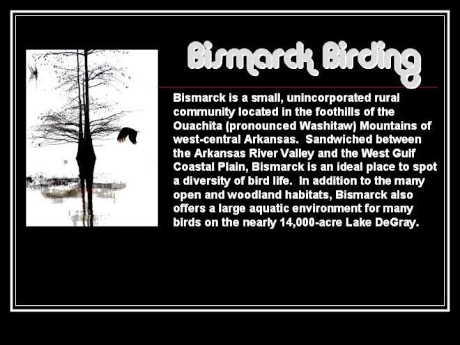 Bismarck  Birding