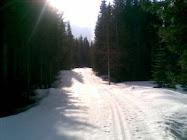 Ettermiddagssol mot Svarthamna