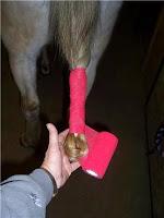 Step 5: Braiding a Horse's Tail