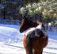 Snow Covered Horse