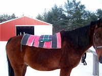 Saddle Pad with Towel on Sway-Backed Arabian