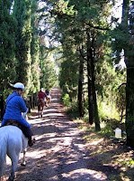 Horseback Riding through Tuscan Trees