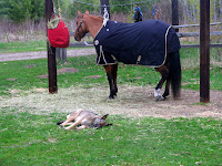 Horse & Dog Tied Up While Camping