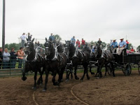 Six-Horse Percheron Show Hitch