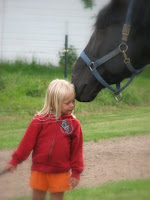 Percheron Stallion with Little Girl