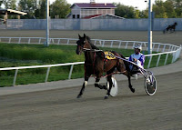 Pacing Standardbred & Sulky
