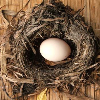 EGG Laying on Nest?