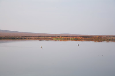 охота на водоеме