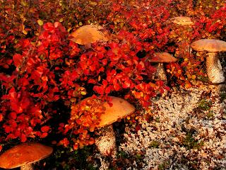 чукотские краски осени