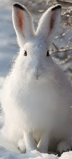 охота на зайца -история