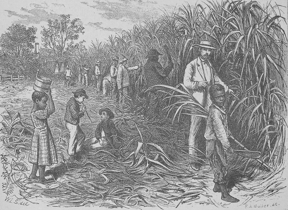 a history of the sugarcane industry in cuba Before the revolution sugar was cuba's economic lifeline were a small price for an industry that raked in millions of dollars every month.