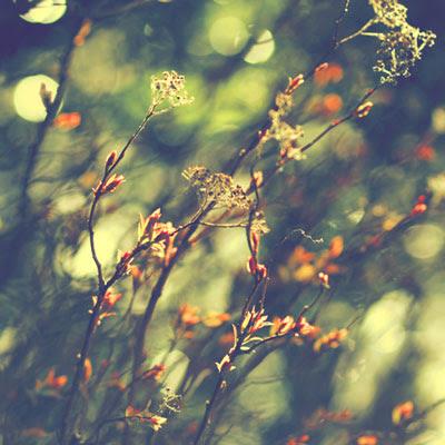 Photoworks by Alicja Rodzik
