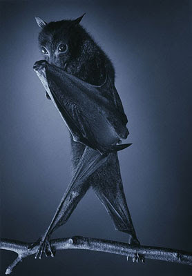 Photoworks by Tim Flach