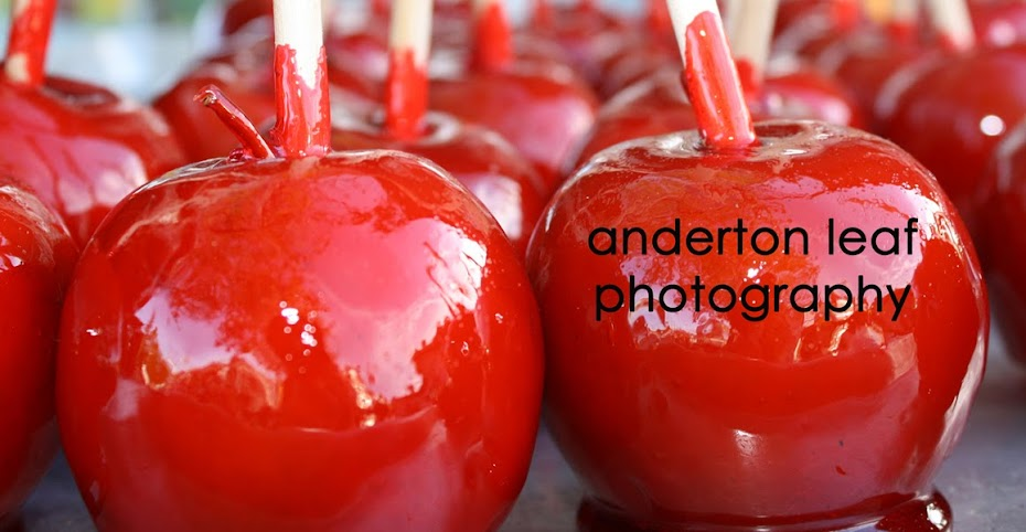 anderton leaf photography
