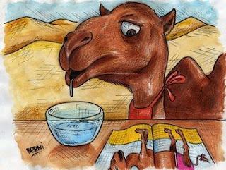 Baba de camelo