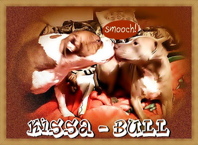 kissa-bull