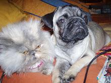 Suzy e Mitchu