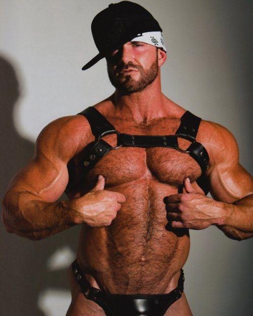 Cock Big muscle bear