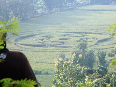 Foto Crop Circle Di Indonesia