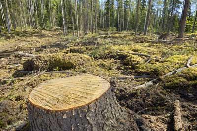 Deforestación en el continente