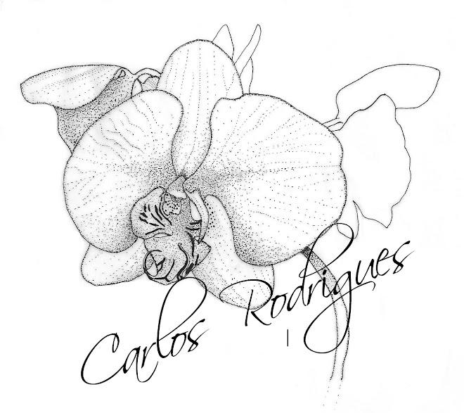 Orquídea 02