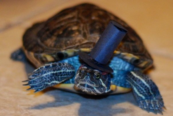 turtle wearing top hat