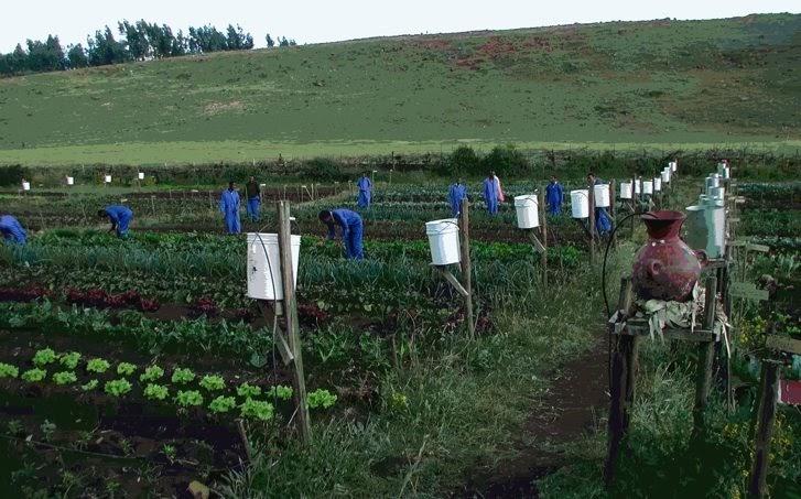 Ezemvelo Eco Campus Bucket Drip Irrigation
