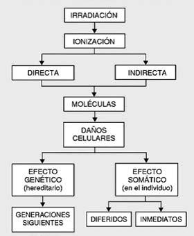 Radiologia a nivel odontologica essc for Cuarto de rayos x odontologia