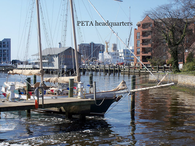 Elizabeth River near PETA's headquarters