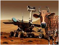 Spirit Rover Alien cow scari.org