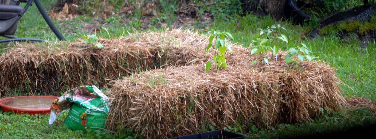 Remembrances of An Arkansas Stamper: Hay Bale Gardening