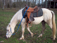 Valley grazing with Western saddle on