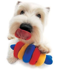 the dogs club gellery : westie