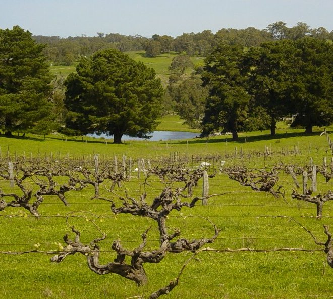 Karra Yerta Wines vineyard, Barossa Ranges