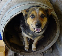 One of our dogs in her barrel