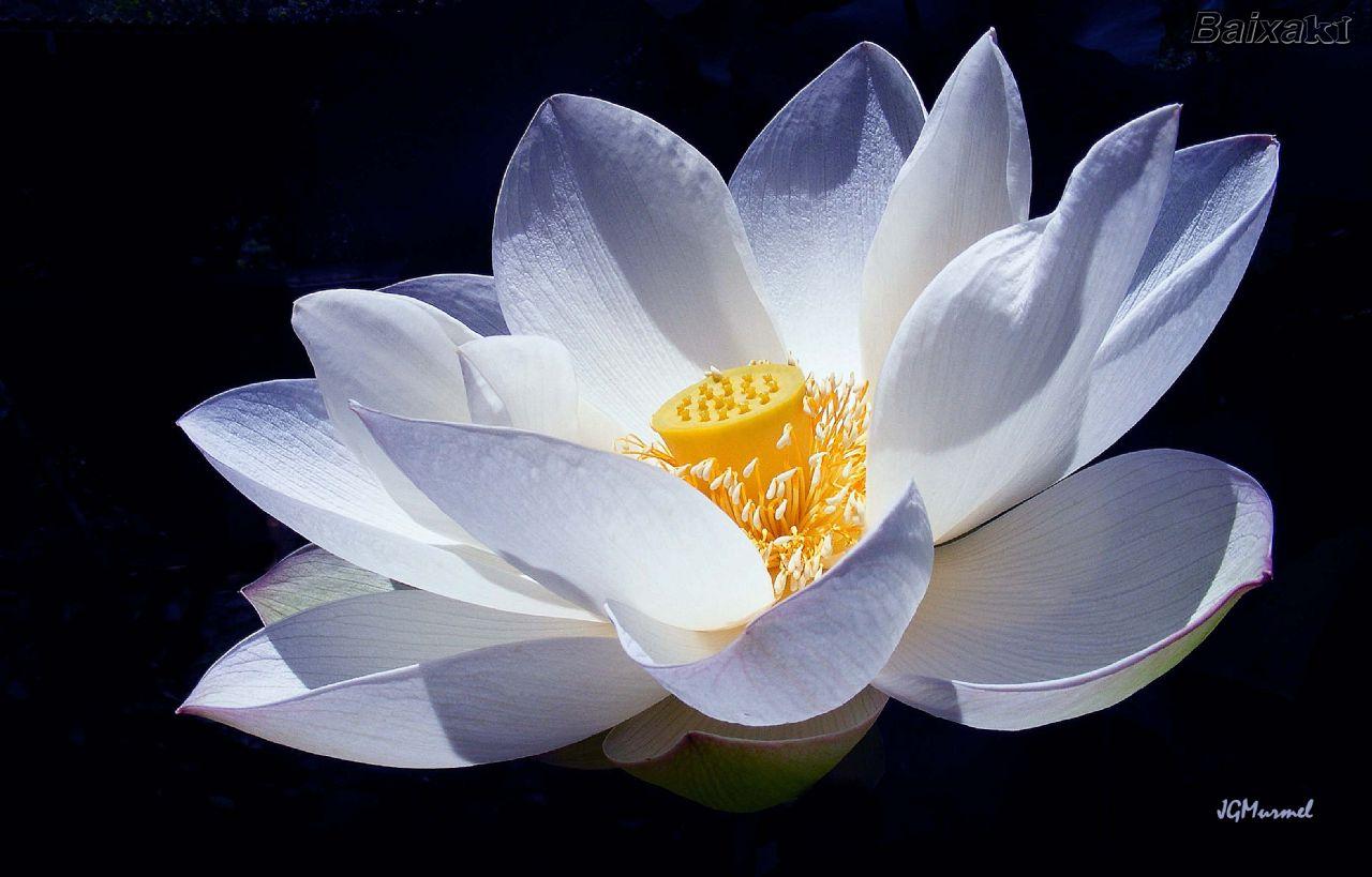 origami lotus flower  u00ab embroidery  u0026 origami
