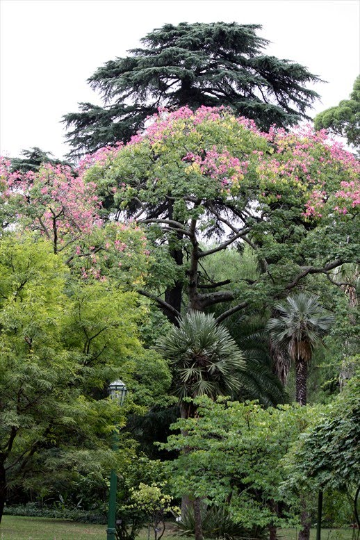 View from Federal Twist: Baroquely Junglesque: Buenos Aires ...