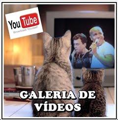 Nossos vídeos!