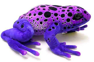 Poison+dart+frog+purple.jpg (490×325)
